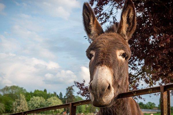 about-huntlands-farm-working-farm-donkeys