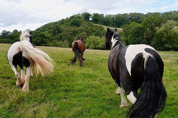 about-huntlands-farm-working-farm-horses